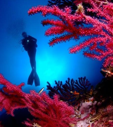Cursos Oceansub Estartit