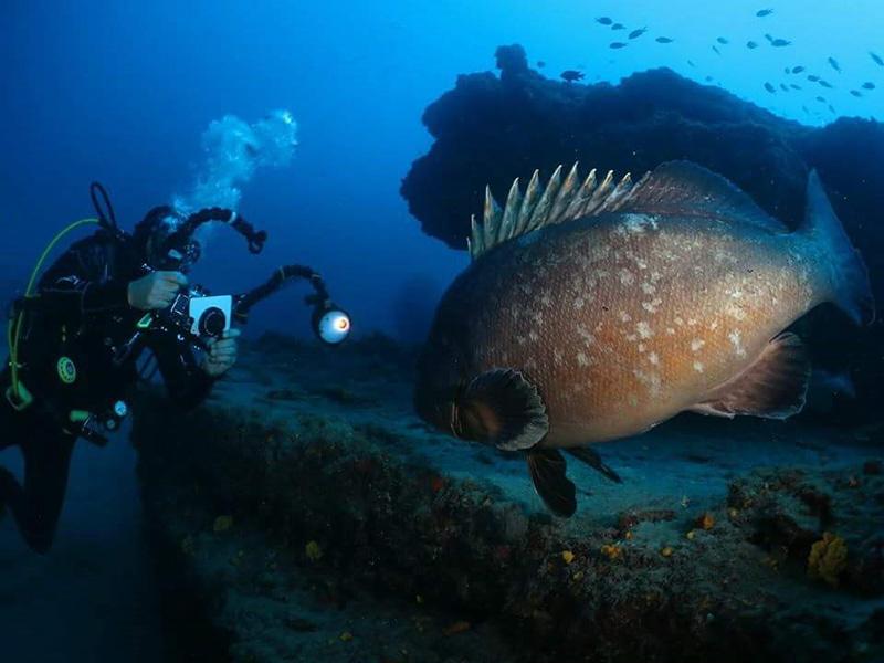 Fotografía submarina Lanzarote Buceo