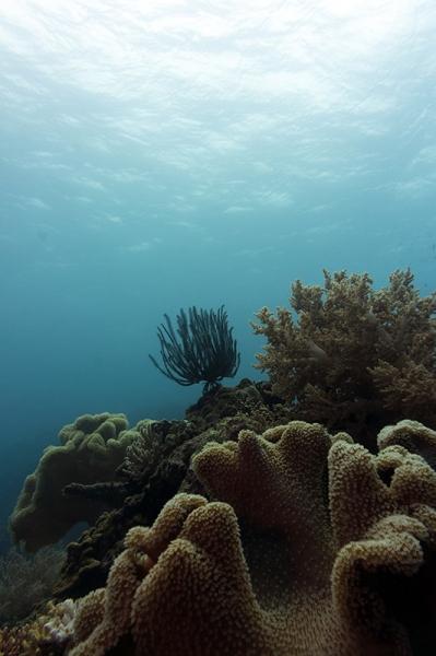 Moalboal arrecife