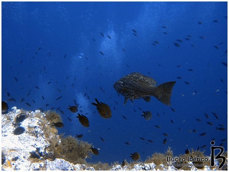 Bajo de Dentro con Mangamar, meros y castañuelas