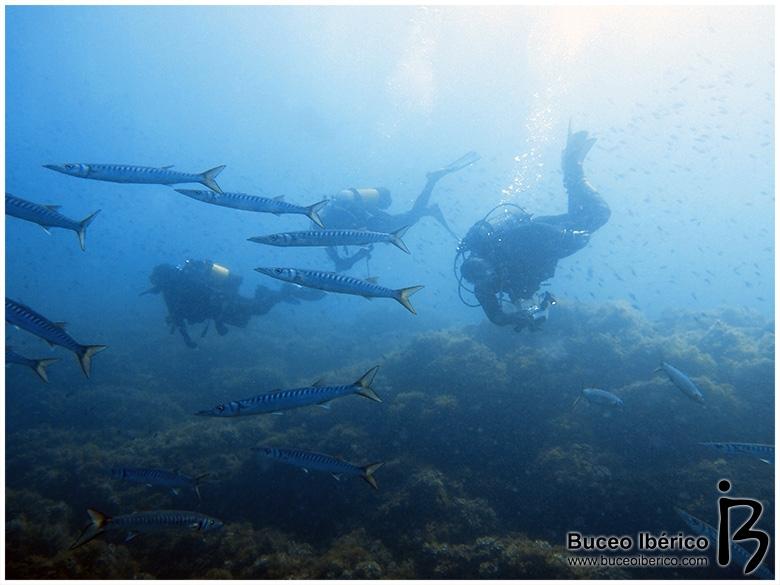 Planeta Azul, barracudas en Piles II