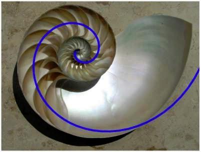 Foto de Wikipedia.org