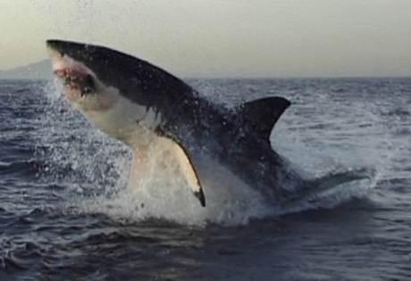 mito tiburon 3