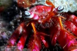ermitano-love-scuba-diving