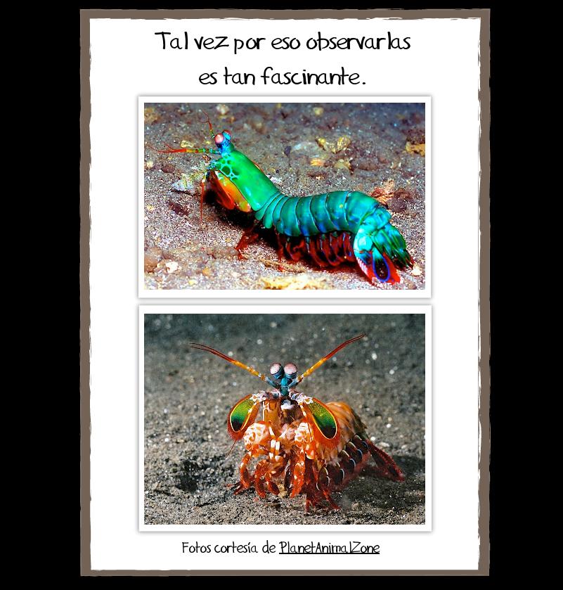mantis-marina-3