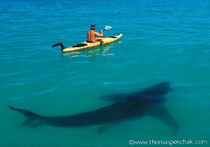 White Shark KayakThomas P. Peschak2