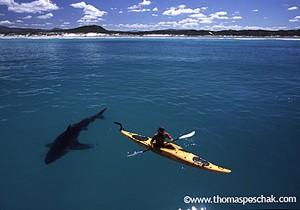 whiteshark--kayak02