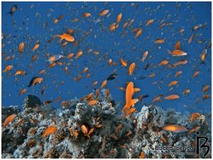 mar-rojo-pececitos-colores