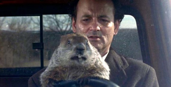 tmp_bill-murray-marmota1966703992