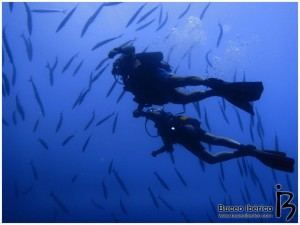 Ayudar al guía en la inmersión