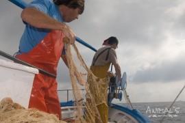 Pesca artesanal en Cabo de Gata.