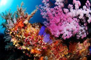 Sangalaki corals