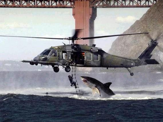 mito tiburón 1