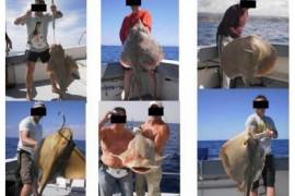SAO-denuncia-capturan-tiburones