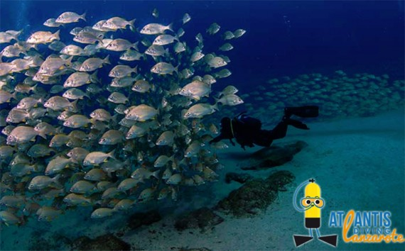 atlantis-diving