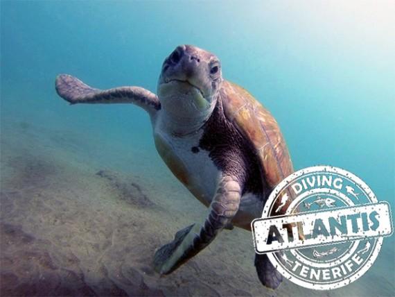 diving-atlantis-front